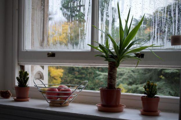 Plants by Window